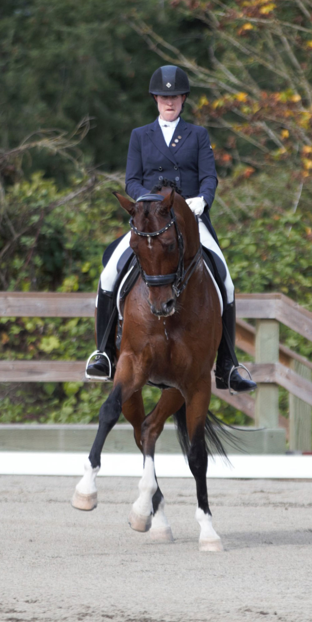The Source for Elite American Dressage Horses